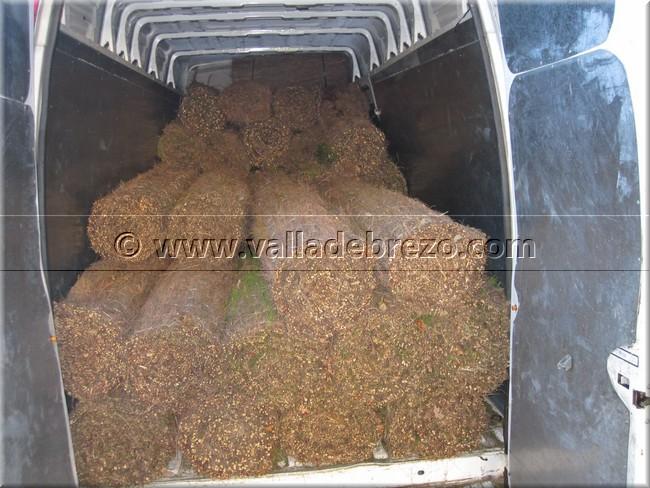 Transporte de brezo para vallas a domicilio entregas de - Precio brezo para vallas ...